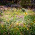 Φωτογραφία: Brown's Canyon Ranch