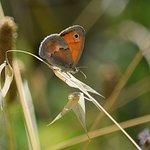 farfalle da rivedere... solo 2