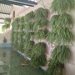 Fazenda Nossa Senhora da Conceicao Photo