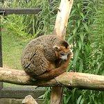 Linton Zoo照片