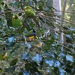 Budgies and Finches