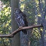 Native Birdlife