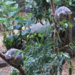 More Koalas