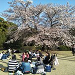 hanami in the open space