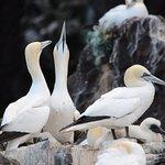 Foto de Scottish Seabird Centre