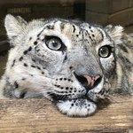 Twycross Zoo Photo
