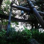 Tarzans tree house