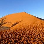 Photo of Acacia Africa