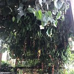 Bild från Josephine Restaurant