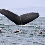 Foto de Central Coast Sailing and Avila Beach Whale Watching