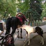 Ostrovsky Park Foto