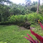 Do you see the Iguana? Just one of many you will see.