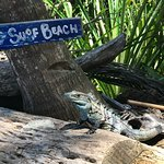 This is Pepe - our Surf Mascot. Harmless, just wants to eat your fruit leftovers