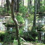 Bilde fra Carolina Beach State Park