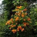 Photo de Kells Bay House & Gardens