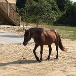 Bobs Wild Horse Tours Foto