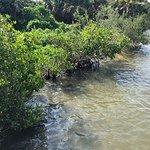 Mangroves on lagoon
