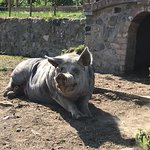 Lawcus Farm Guest House Photo