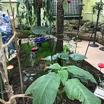 Bild från Joseph L. Popp, Jr. Butterfly Conservatory
