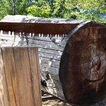 Φωτογραφία: BC Interior Forestry Museum
