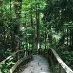 Nature Center; Steps and Trails Down to the Ravine