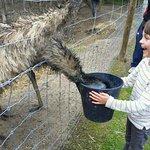 Emu Ridge resmi