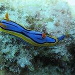babosa de mar-sea slug