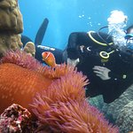 Anemone fish - pez payaso