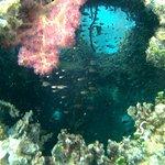 PADI 5* Panorama Divers Foto