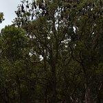 Bild från Centennial Park