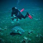 Foto van H2O Divers Dahab