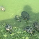 We had an amazing time touring Tybee Island and feeding the turtles with our big family. Perfect