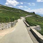 Photo of Corniche Lavaux Vineyards