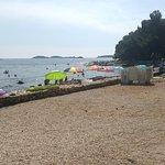 Mare, spiaggia e pineta