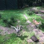 Foto de ZooTampa at Lowry Park