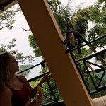 monkeys on our balcony.