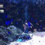 Foto de The Shore Oceanarium