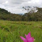 Foto de Sai Thong National Park