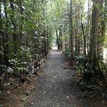 Foto de Mamu Tropical Skywalk