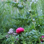Photo of Botanical Garden Alpinum Schatzalp