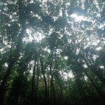 Photo of Mahogany Forest