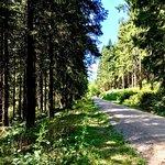 Liebesbankweg Foto