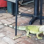 Lunch time visitor atCaroline's
