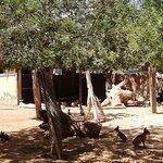 Foto de Limassol Zoo
