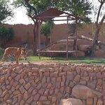 صورة فوتوغرافية لـ Riyadh Zoo