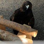 Foto de Sunriver Nature Center