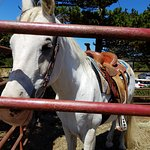 Φωτογραφία: Green Acres Equestrian Center