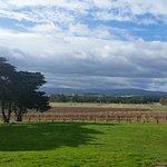 Φωτογραφία: Yering Farm Wines
