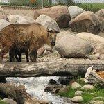 Red River Zoo resmi