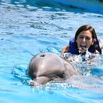 Cabo Dolphins by Cabo Adventures Foto